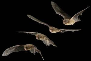 pipistrelli-bioparco-roma