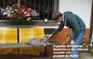 Gattino grattato