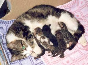 Emy e i suoi piccoli