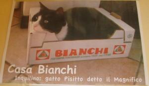 Il gatto Pisotto
