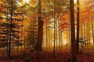 macolin_sur_bienne_magglingen_luci_e_nebbie_d_autunno_nel_bosco