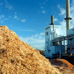 energia_biomassa_agroenergia_pioppo_biomassa_energia_elettrica_da_biomassa_coltivazione_3