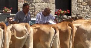 La Festa dei Genovesi a San Cipriano di Serra Riccò