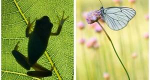 Frammenti di biodiversità a Mele