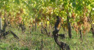 In vino veritas: la ricchezza enogastronomica dell'Oltregiogo