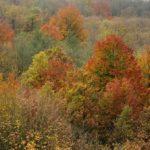 """Lo spettacolo del """"foliage"""" nel Parco del Beigua"""