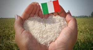 Coldiretti, è allarme per il riso italiano