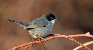 Parco del Beigua, alla scoperta dei becchi degli uccelli