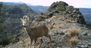 Beigua, trekking fotografico alla scoperta della biodiversità