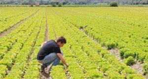 Imprenditoria agricola, problemi e prospettive a convegno