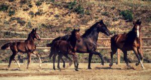 Varina Country Fest, un salto nel vecchio west a Rossiglione