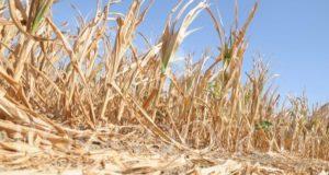 Siccità, in arrivo 700 milioni di Euro per le aziende agricole