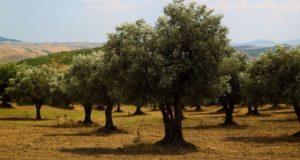 Coldiretti Liguria, in difficoltà coltivazioni e allevamenti a causa della siccità