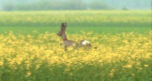 Fauna selvatica, alla Cia Alessandria piace la scelta della Provincia