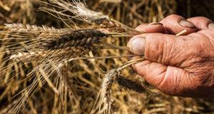 Biologicamente: l'agricoltura tra ricerca e sussistenza