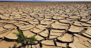 Coldiretti, coltivazioni compromesse a causa della grave siccità