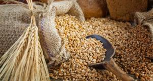 Alessandria, incontro sulla qualità dei cereali