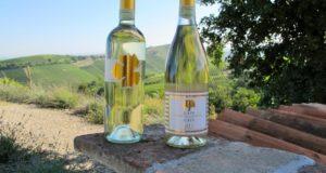 Alla scoperta dei vini bianchi piemontesi