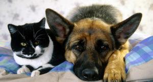 Cani e gatti nei locali: decide se farli entrare l'imprenditore, non il comune