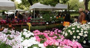 Arenzano, attesa per FlorArte, l'arte interpretata con i fiori