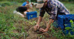 Allasia (Confagricoltura) interviene sul rinnovo del contratto agricolo