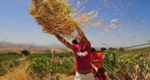 Bosco Marengo, il campo estivo di Libera e CIA-Agricoltori Italiani