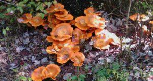 Parco del Beigua, un'escursione alla scoperta dei funghi estivi