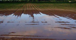 Danni da maltempo, agricoltura in ginocchio