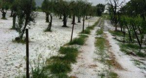 Maltempo, agricoltura in ginocchio: danni per milioni di Euro nei vigneti