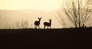 Tiglieto, un week-end con il Parco del Beigua